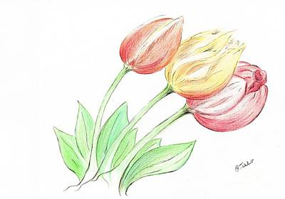 Drawing - Tulips by Teresa White