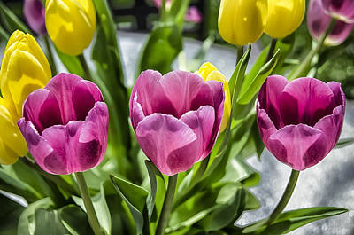 Photograph - Tulips Three by Eric Miller