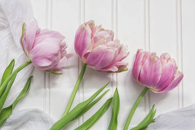Photograph - Tulips Three by Kim Hojnacki