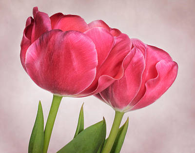 Photograph - Tulips Two by David and Carol Kelly