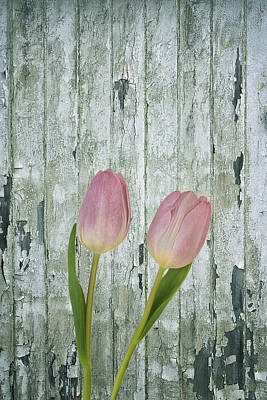 Photograph - Tulips Two by Kim Hojnacki