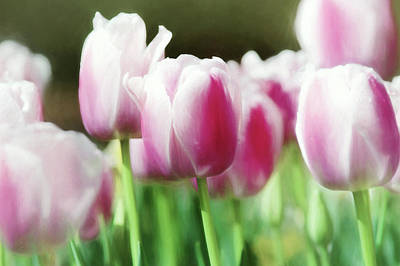 Photograph - Tulips Violet Pastel 3817 by Rospotte Photography