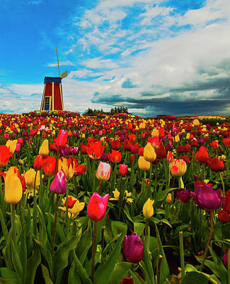 Woodburn Photograph - Tulips Windmill 2 by Dale Stillman