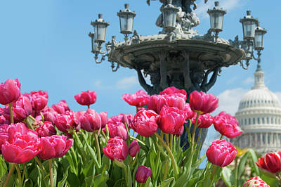 Photograph - Tulips With Bartholdi Fountain by Dennis Ludlow