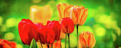 Photograph - Tulips5 by David Heilman