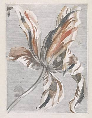 Rose Painting - Tulp, Anonymous, 1688 - 1698 by Tulp