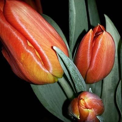 Music Wall Art - Photograph - #tulpaner #flowers #spring #vår by Annelie Sandgren