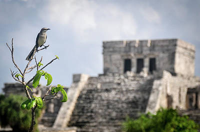 Photograph - Tulum Mayan Ruins by Joel Thai