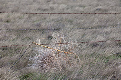 Photograph - Tumbleweed by Fran Riley