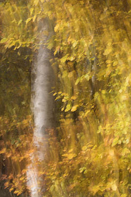 Photograph - Tumbling Leaves by Karen Van Der Zijden