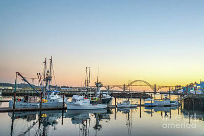 Animals Photos - Tuna boats resting for the night by Paul Quinn
