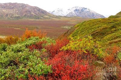 Photograph - Tundra Kaleidoscope  by Frank Townsley