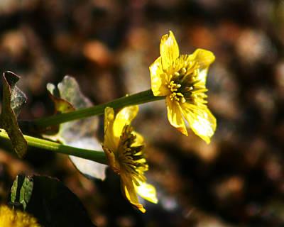 Photograph - Tundra Rose by Anthony Jones