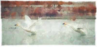 Wall Art - Photograph - Tundra Swan Takeoff by Martin Belan