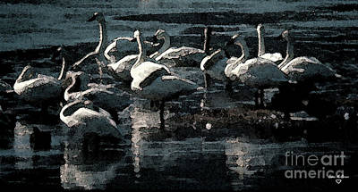 Donna Brown Photograph - Tundra Swans by Donna Brown