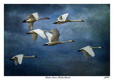 John Williams Digital Art - Tundra Swans Tundra Bound by John Williams