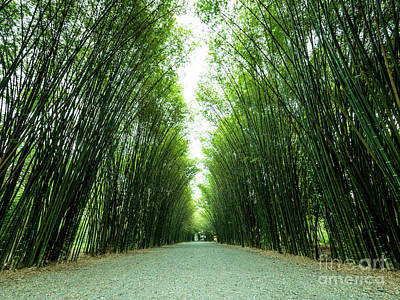 Art Print featuring the photograph Tunnel Bamboo Trees And Walkway. by Tosporn Preede
