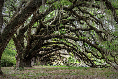 Photograph - Tunnel In Charleston by Jon Glaser