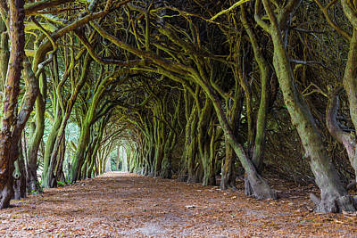 Art Print featuring the photograph Tunnel Of Intertwined Yew Trees by Semmick Photo