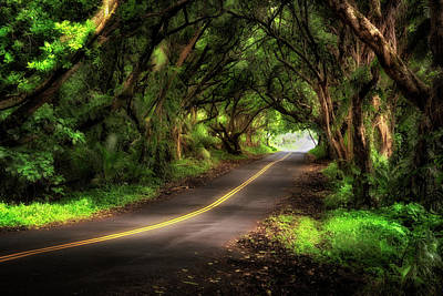 Photograph - Tunnel Of Trees by Nicki Frates