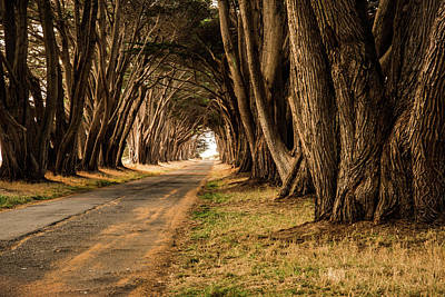 Photograph - Tunnel Of Trees by Wendy Carrington