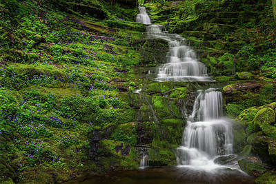 Woodland Violet Photograph - Tunxis Forest Waterfall by Bill Wakeley