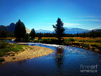 Photograph - Tuolumne Meadow Yosemite by Sharon Soberon