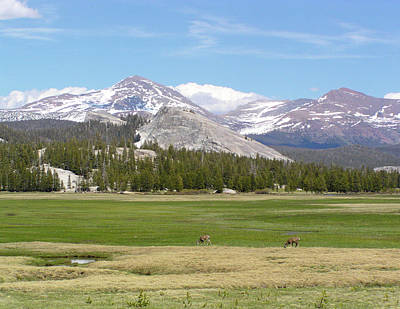 Photograph - Tuolumne Meadows by Bruce