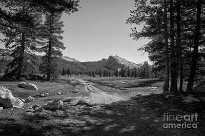 Photograph - Tuolumne Trail Visit Www.angeliniphoto.com For More by Mary Angelini