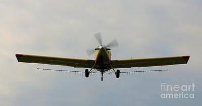 Photograph - Turbo Thrush 3 by Rick Lipscomb