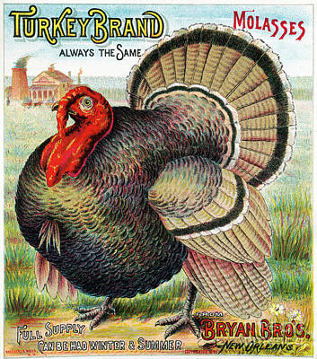 Photograph - Turkey Brand Molasses.  by Granger