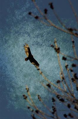 Photograph - Turkey Buzzard by Ericamaxine Price