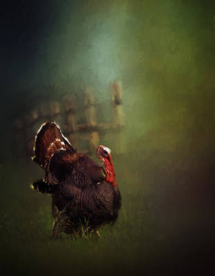 Gobbler Photograph - Turkey by David and Carol Kelly