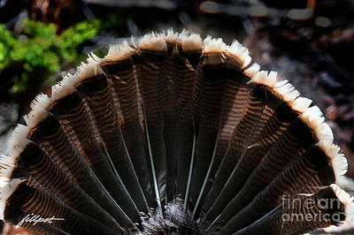 Photograph - Turkey Feathers by Jim Fillpot