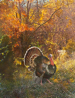 Painting - Turkey In The Woods by John Dyess