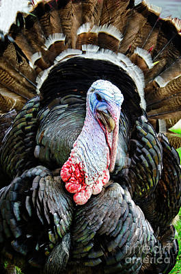 Photograph - Turkey Portrait by Jim And Emily Bush