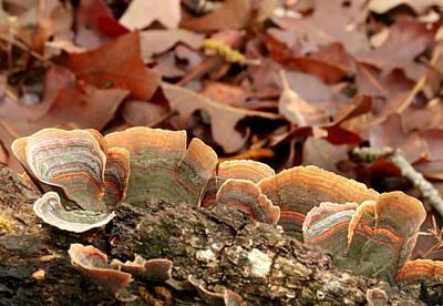 Bracket Fungus Photograph - Turkey Tail Bracket Fungus by Sheila Brown