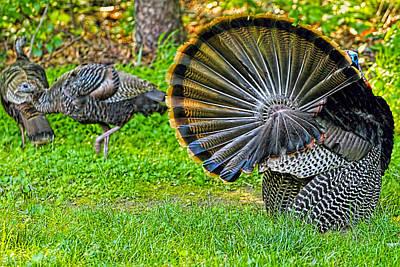 Barnyard Digital Art - Turkey Tails by Geraldine Scull