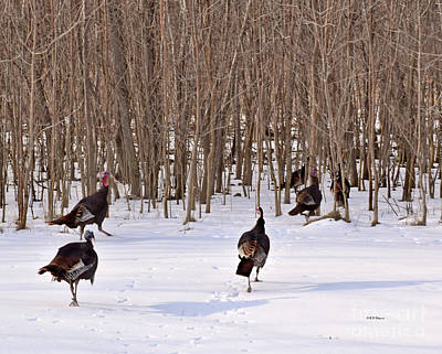Photograph - Turkey Trot by Kathy M Krause