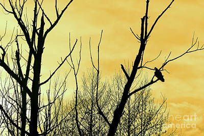 Photograph - Turkey Vulture And Yellow Sky by Karen Adams
