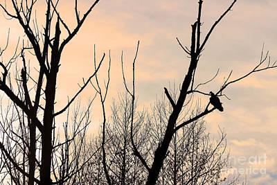 Photograph - Turkey Vulture At Sunset by Karen Adams
