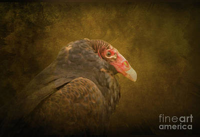 Photograph - Turkey Vulture by Charles Owens