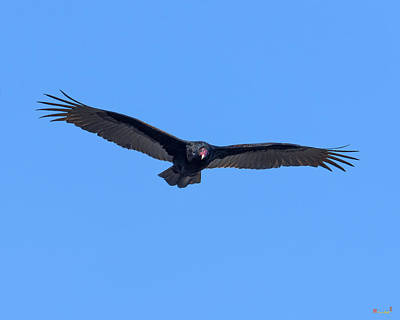 Photograph - Turkey Vulture Drb0223 by Gerry Gantt