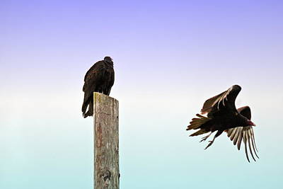 Photograph - Turkey Vulture Duo 2 by Joyce Dickens