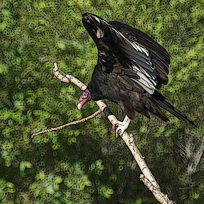 Vulture Digital Art - Turkey Vulture by Ernie Echols