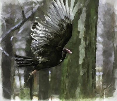 Photograph - Turkey Vulture -  by Julie Weber