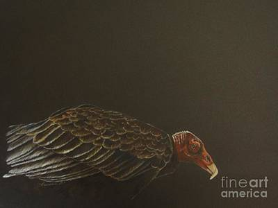 Drawing - Turkey Vulture by Laurianna Taylor