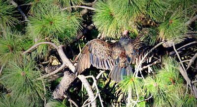 Photograph - Turkey Vulture Spread by Joyce Dickens