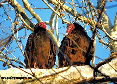 Photograph - Turkey Vultures And The Big Blue Sky by Tami Quigley