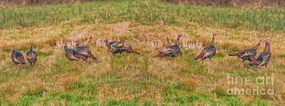 Turkey Digital Art - Turkeys In Field by Randy Steele